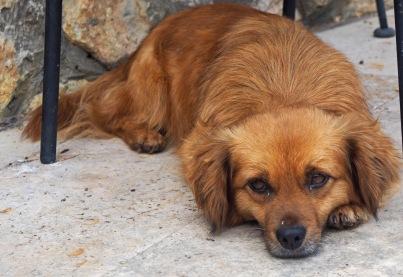 Cute resting dog