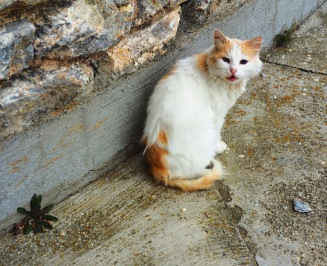 Vodno mountain cat